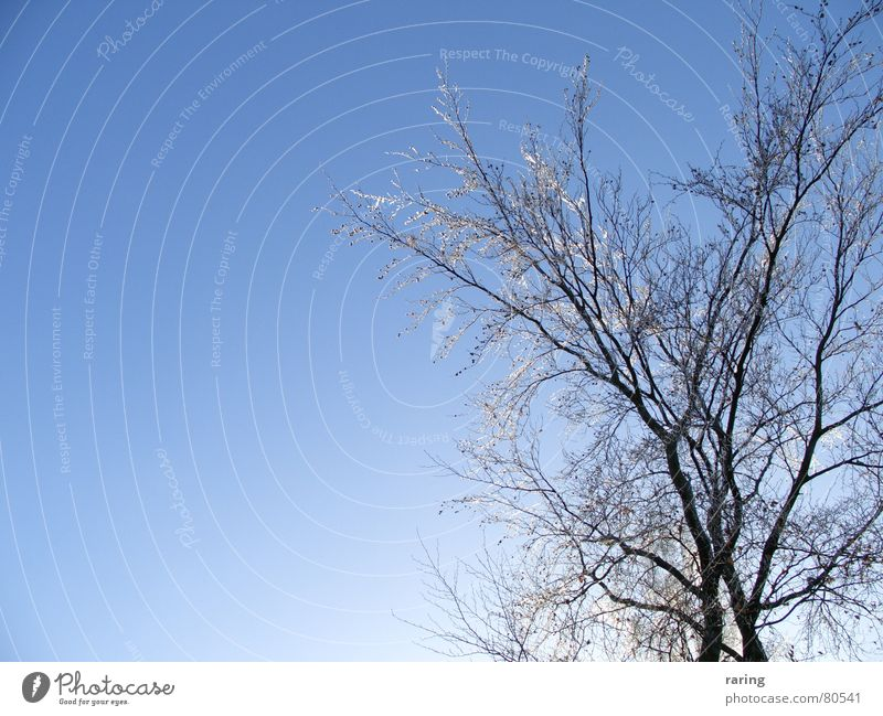 Nature Sky Tree Blue Winter Snow Ice Frost Level