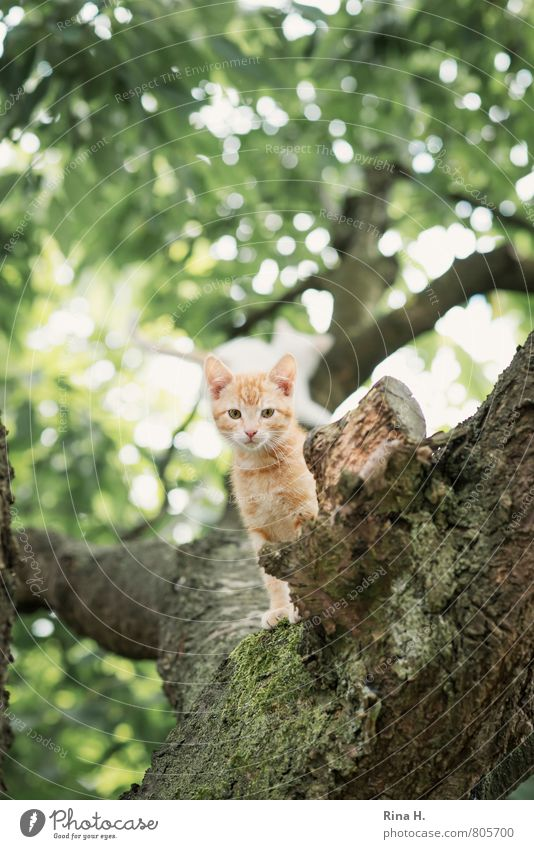 baby Summer Tree Garden Animal Cat 1 Baby animal Observe Sit Cute Watchfulness Tiger skin pattern Alert Colour photo Subdued colour Exterior shot Deserted