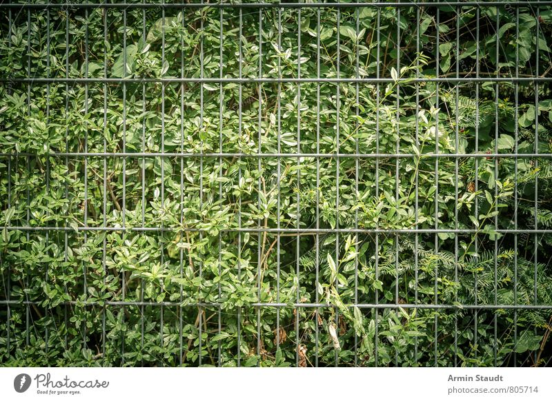 Bush and metal fence Summer Plant Bushes Foliage plant Hedge Fence Metalware Growth Authentic Dark Simple Green Moody Nature Arrangement Safety Environment Town