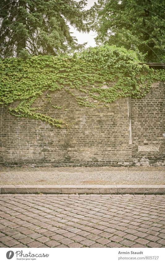 Street, sidewalk, wall, wine Summer Nature Plant Sky Tree Town Architecture Wall (barrier) Wall (building) Brick Old Authentic Dirty Historic Broken Moody