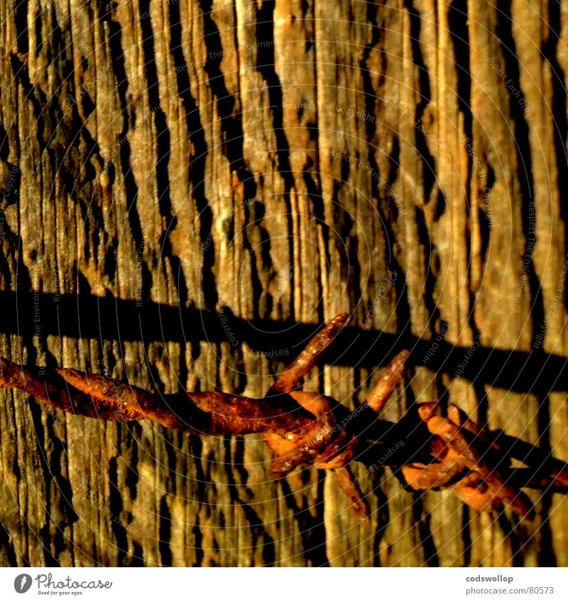 Brown Gold Safety Dangerous Border Rust Barbed wire