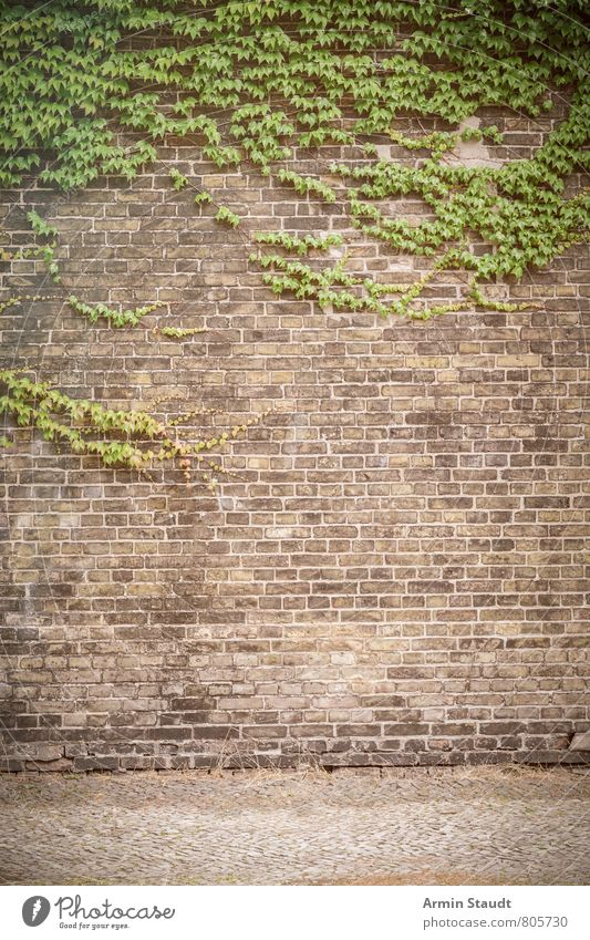 Russian wine and brick wall Summer Sky Plant Tree Virginia Creeper Tendril Overgrown Town Architecture Wall (barrier) Wall (building) Street Brick Old Authentic