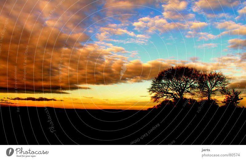 melancholy Clouds Sunset Tree Sky Beautiful End Beginning jarts Sadness