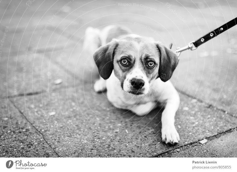 Dog Animal Sadness Street Eyes Movement Elegant Protection Longing Trust Appetite Watchfulness Animal face Fatigue Stress Distress