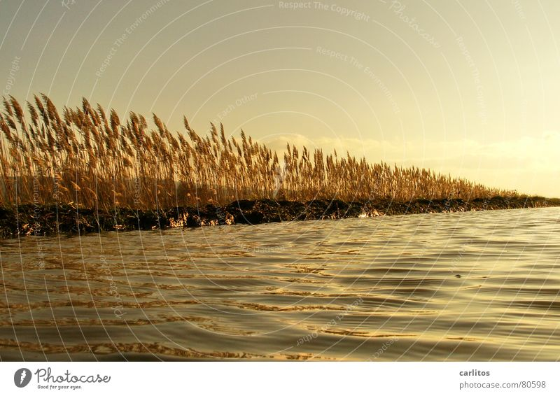 Nature Water Sky Sun Winter Calm Relaxation Autumn Meadow Grass Waves Wind Weather Environment Gold