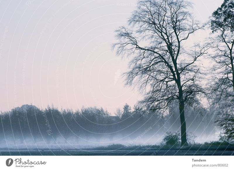 cold morning Winter tree graphic moody dusty fog Cool (slang) blue silence clearness landscape Exterior shot