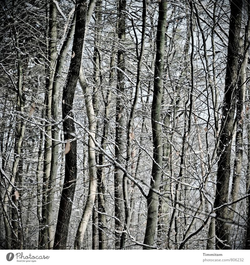 Narrow. Environment Nature Plant Winter Weather Tree Branchage Forest Wood Esthetic Cold Natural Gray Black White Emotions Snowfall Leaf Versatile Colour photo