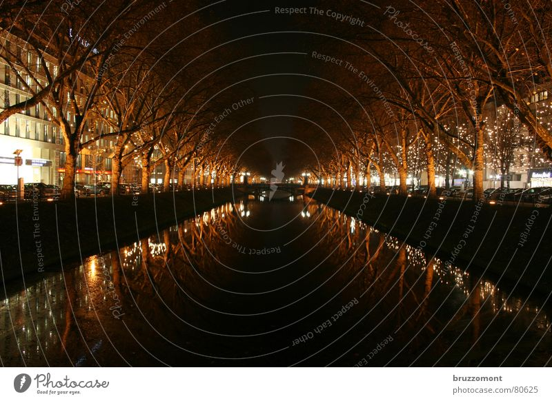 kastanienallee until 1848 Queue Night Reflection Tree Winter Traffic infrastructure Long exposure Water kö royal avenue Duesseldorf