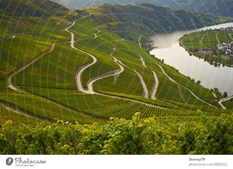 Moselle Landscape Autumn Agricultural crop Vine River Vineyard Wine growing Mosel (wine-growing area) Street Lanes & trails Road junction Curve Winding road