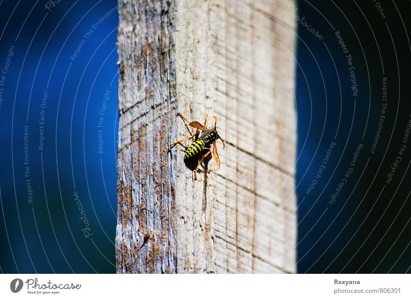Sky Nature Summer Sun Animal Environment Freedom Health care Elegant Esthetic Beautiful weather Threat Wing Adventure Insect Bee