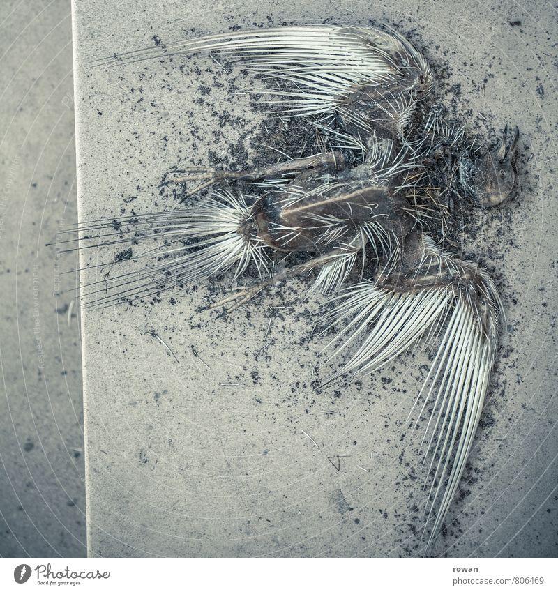 Animal Dark Death Bird Gloomy Threat Wing Transience Illness Creepy Whimsical Bizarre Corpse Skeleton Anatomy