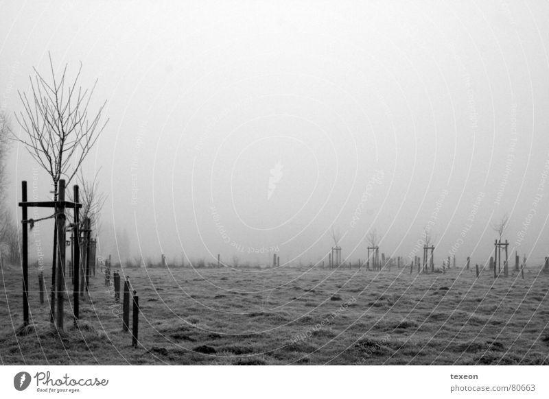 Tree Winter Cold Dark Meadow Autumn Gray Field Wet Fog Frost Damp Pasture Hazy Spooky Comfortless