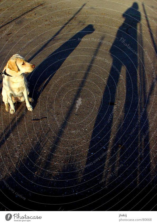 Animal Street Dog Lanes & trails Instant messaging Blonde Going Background picture Walking To go for a walk Floor covering Asphalt Long Pelt Curiosity