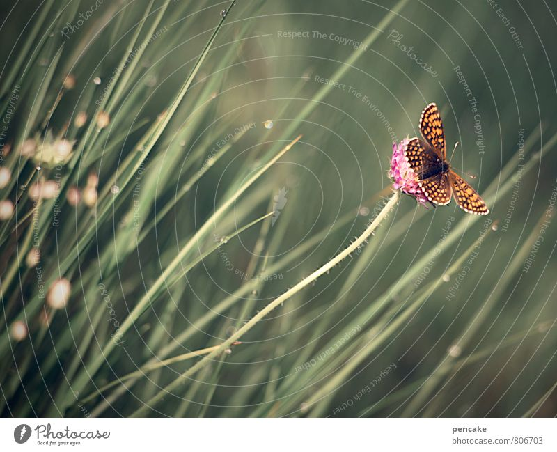 butterfly in the wind Nature Plant Animal Elements Summer Wind Warmth Grass Bushes Butterfly 1 Sign Flying To enjoy To swing Esthetic Authentic Romance
