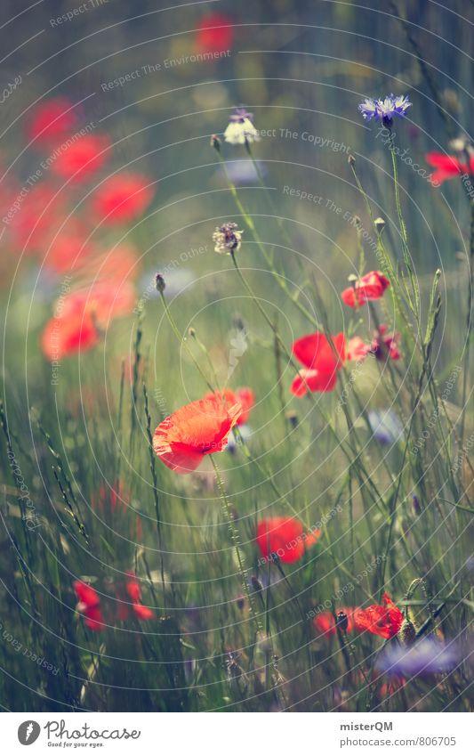 Berlin meadows. Art Esthetic Contentment Soft Poppy Poppy blossom Poppy field Meadow Wayside Red Dreamily Idyll Grass Green Summery Blur Blossoming Flower