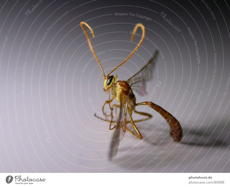 Illegal Alien Fantasy literature Macro (Extreme close-up) mutation nasty fiction insects stringer Extraterrestrial being