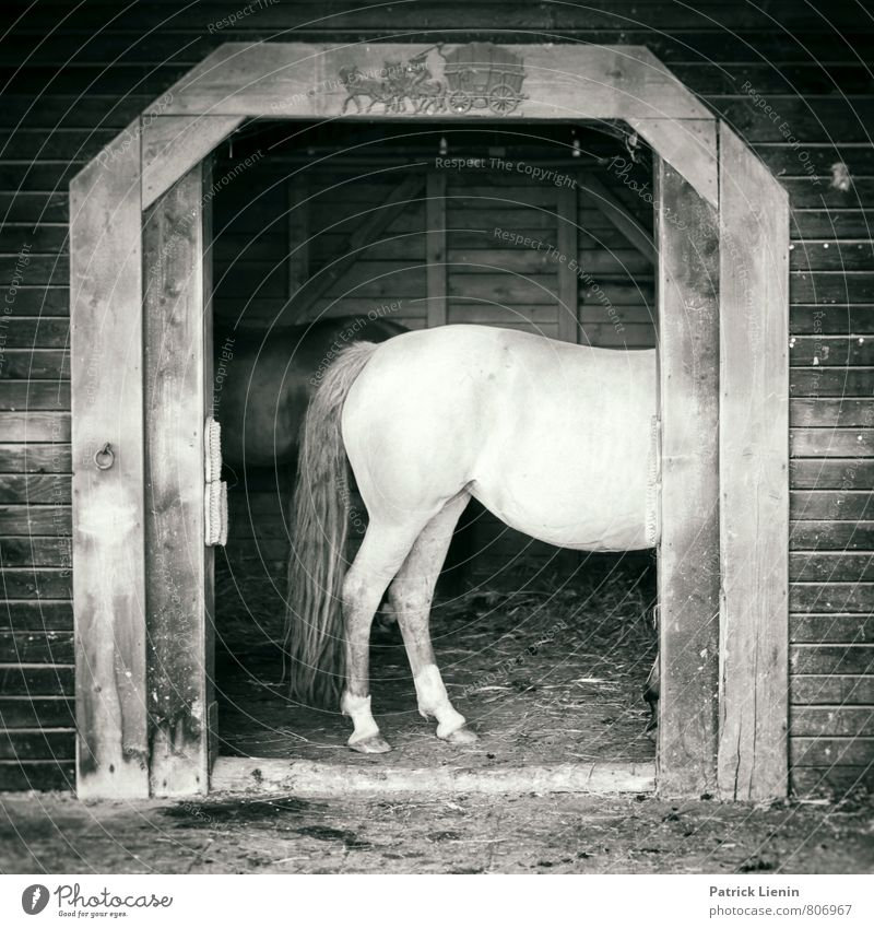 Horse in the hallway Lifestyle Beautiful Wellness Well-being Senses Leisure and hobbies Ride Vacation & Travel Trip Summer Sports Environment Animal Farm animal