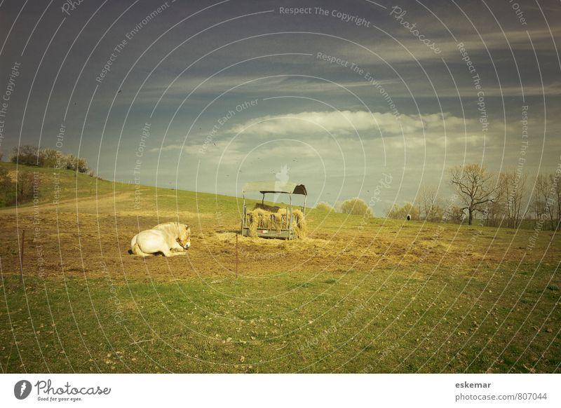 Hiddensee with horse Vacation & Travel Island Nature Landscape Animal Sunlight Meadow Field Hill Baltic Sea Farm animal Horse 1 Relaxation Lie Esthetic Natural