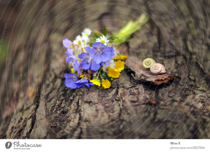 still lifes Valentine's Day Mother's Day Nature Spring Summer Tree Flower Blossom Animal Snail 2 Blossoming Bouquet Donate Meadow flower Pick Snail shell