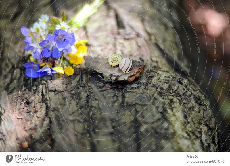 still lifes Mother's Day Spring Summer Flower Blossom Animal Snail Blossoming Fragrance Emotions Moody Sympathy Love Infatuation Romance Lovesickness Bouquet