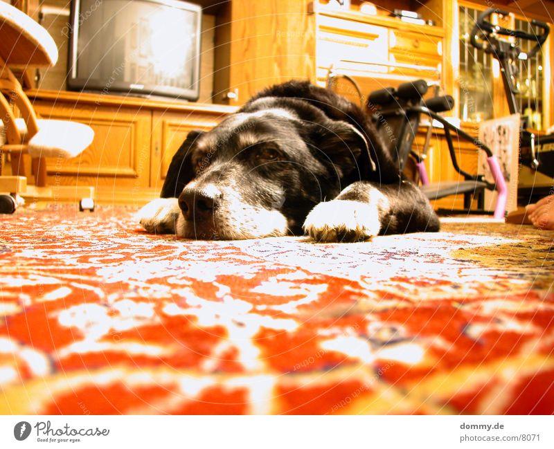 Dog Life I Long exposure Flat (apartment) Black life as a dog stealing Boredom lie around