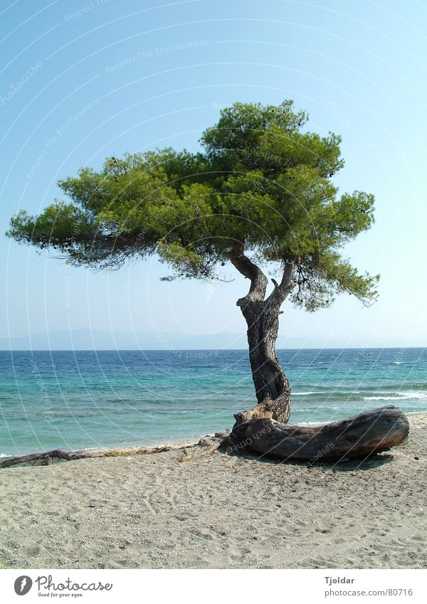 Tree on the beach Vacation & Travel Freedom Beach Ocean Sand Water Sky Coast Authentic Natural Blue Green Loneliness Defiant Chalkidiki Greece Beige Paradise