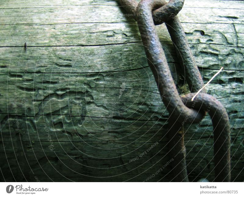 without words. Chain link Tree Wood Captured Green Loneliness Hope Calm Serene Tree trunk Barrier Natural phenomenon Autumn Grief Distress follow a line Nature