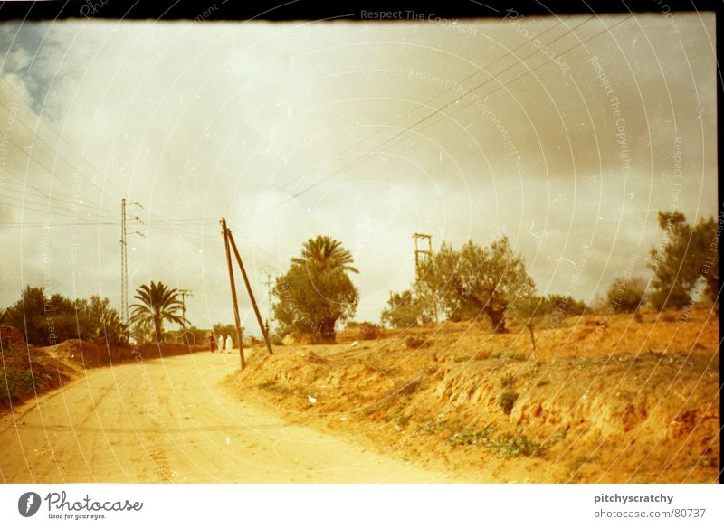 Street in Tunisia Yellow White Village Palm tree Loneliness Lanes & trails way Scan scratch Sky Desert