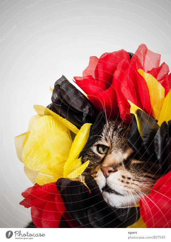 Cat Red Animal Black Funny Exceptional Feasts & Celebrations Fashion Party Germany Gold Decoration Crazy Blossoming Uniqueness Hope
