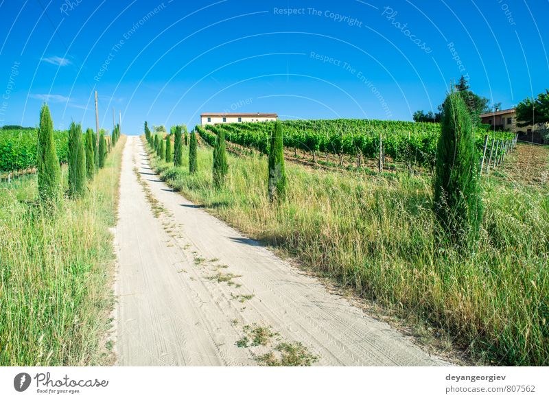 Vineyards and farm road in Toscana Vacation & Travel Summer House (Residential Structure) Culture Nature Landscape Sky Tree Meadow Hill Street Green Idyll Italy