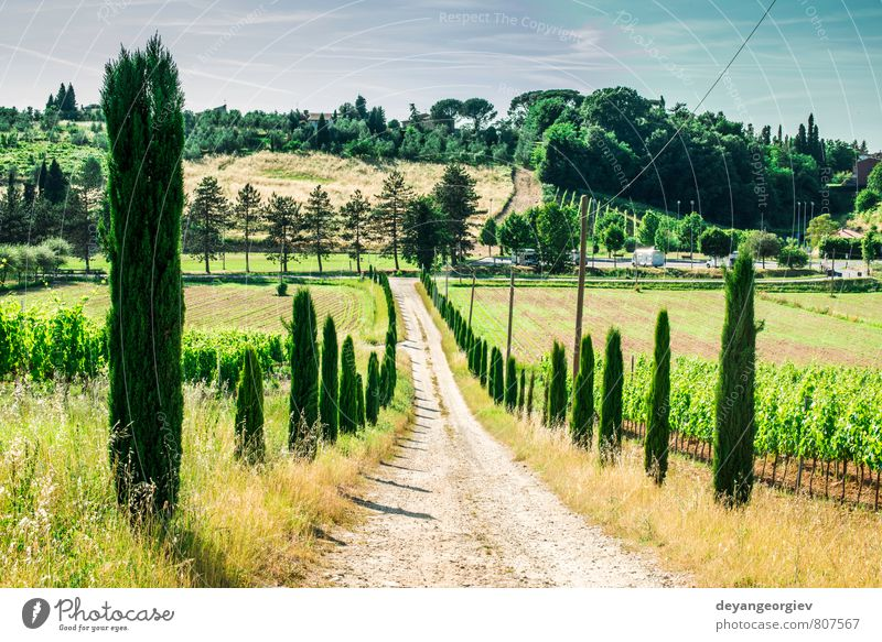 Vineyards and farm road in Toscana Sky Nature Vacation & Travel Green Summer Tree Landscape House (Residential Structure) Street Meadow Idyll Europe