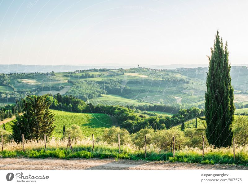 Cypress tree in Toscan Vacation & Travel Summer House (Residential Structure) Culture Nature Landscape Sky Tree Meadow Hill Street Green Idyll Italy Tuscany