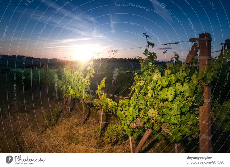 Vienyards at sunset Sky Nature Vacation & Travel Green Sun Tree Landscape Autumn Growth Fruit Tourism Farm Harvest France Rural Valley