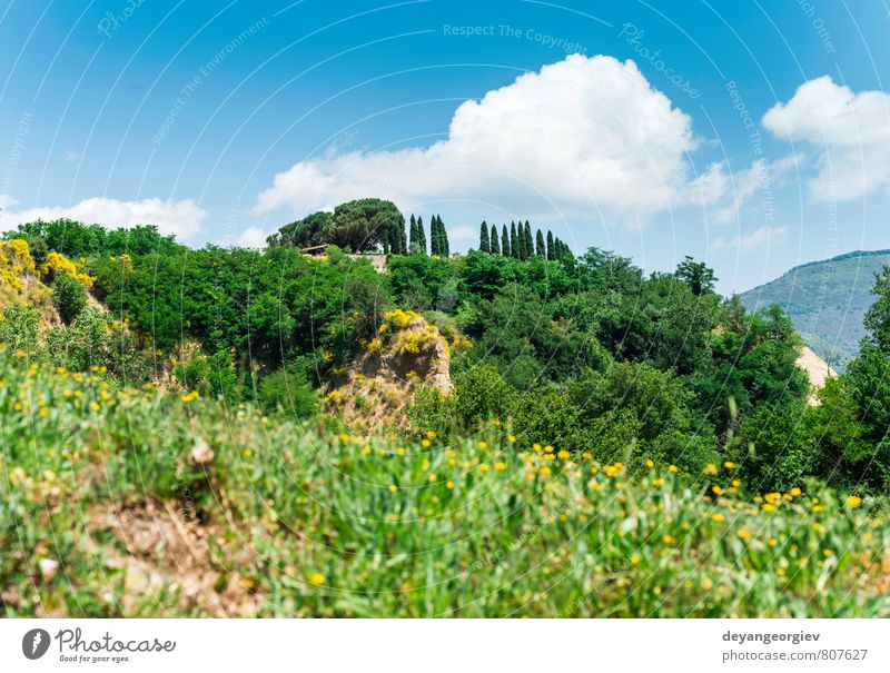 Tuscany landscape Nature Green Summer Tree Landscape House (Residential Structure) Street Meadow Idyll Beauty Photography Mysterious Italy Hill Farm Rural