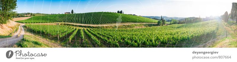 Vineyards in Tuscany. Panoramic view Sky Nature Vacation & Travel Plant Green Summer Sun Tree Landscape House (Residential Structure) Street Autumn Horizon