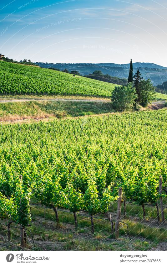 Vineyards in Tuscany Sky Nature Vacation & Travel Plant Green Summer Sun Tree Landscape House (Residential Structure) Street Autumn Horizon Growth Europe
