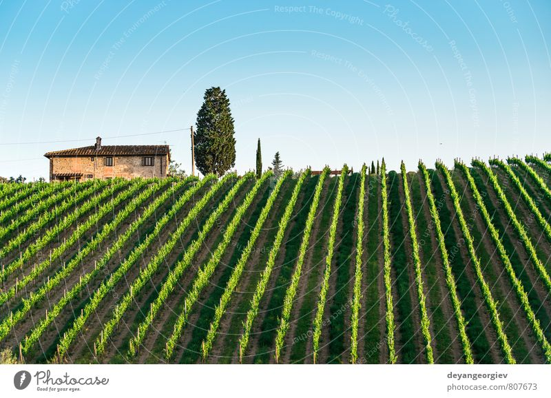 Vineyards in Tuscany Vacation & Travel Summer Sun House (Residential Structure) Nature Landscape Plant Sky Horizon Autumn Tree Hill Street Growth Green Italy