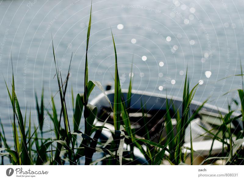 Blue Plant Green Water Summer Sun Flower Coast Grass Spring Swimming & Bathing Lake Watercraft Bushes Wet Beautiful weather