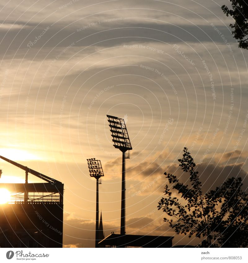 twilight of the gods Sports Ball sports Stands Soccer Sporting Complex Football pitch Stadium Millerntor Floodlight Sky Clouds Tree Blue Black Colour photo