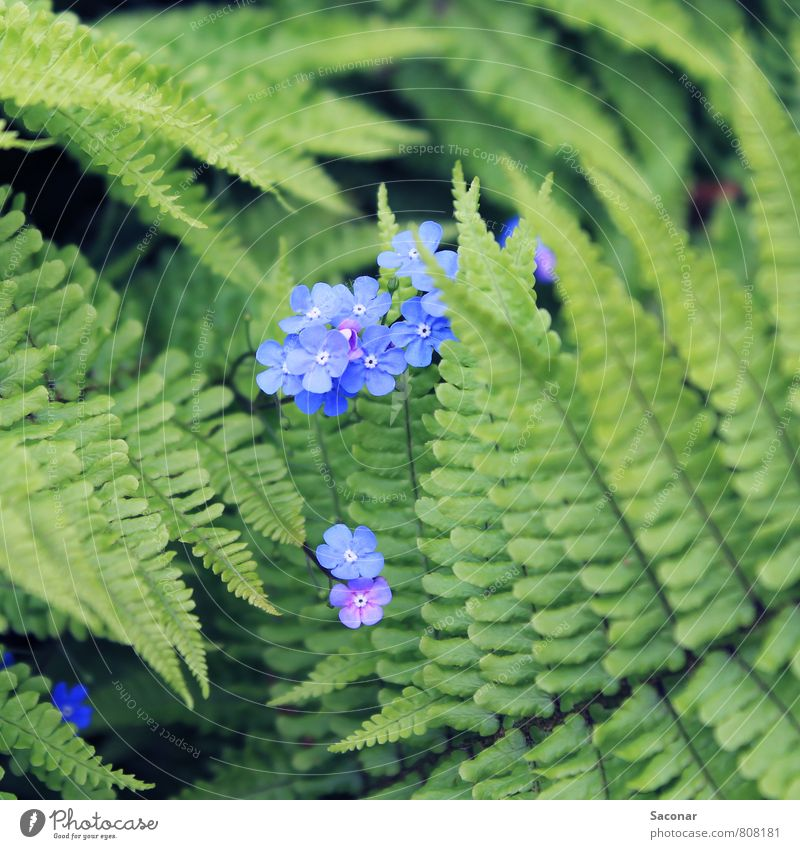 Flowering fern Plant Spring Fern Blossom Wild plant Forest Bog Marsh Esthetic Beautiful Small Natural Brown Green Spring fever Fragrance Discover Idyll Moody