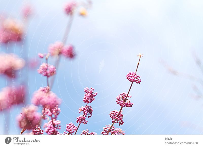 Nature Vacation & Travel Blue Plant Beautiful Summer Tree Flower Calm Spring Blossom Happy Feasts & Celebrations Moody Pink Contentment