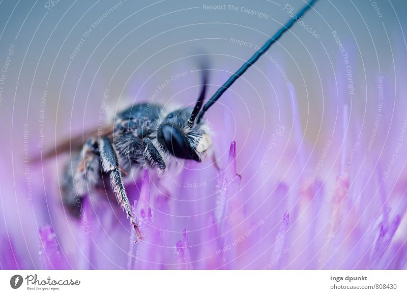Animal Environment Wild animal Bee Sprinkle