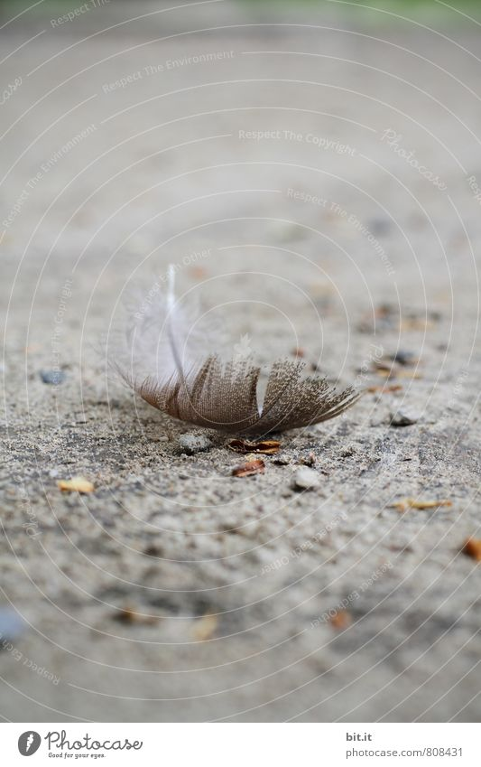 Nature Loneliness Animal Sadness Emotions Death Gray Bird Dream Feather Wing Church Sign Protection Grief To fall