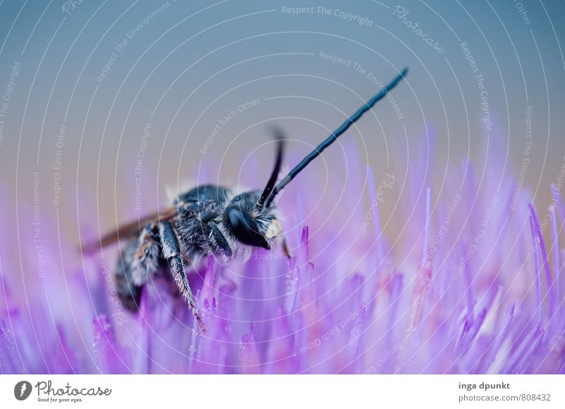 Nature Plant Summer Animal Environment Blossom Spring Garden Park Wild animal Beautiful weather Fantastic Touch Violet Insect Environmental protection