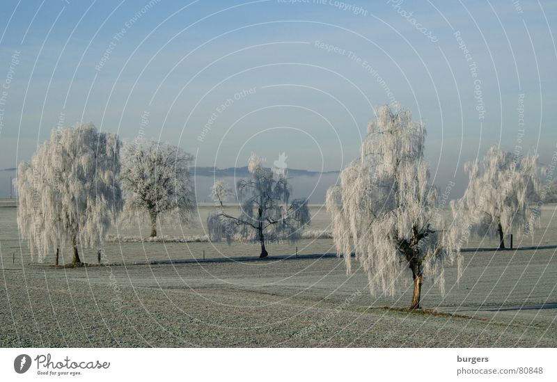 Sky Tree Blue Winter Cold Snow Landscape Field Frost Switzerland Hoar frost Birch tree