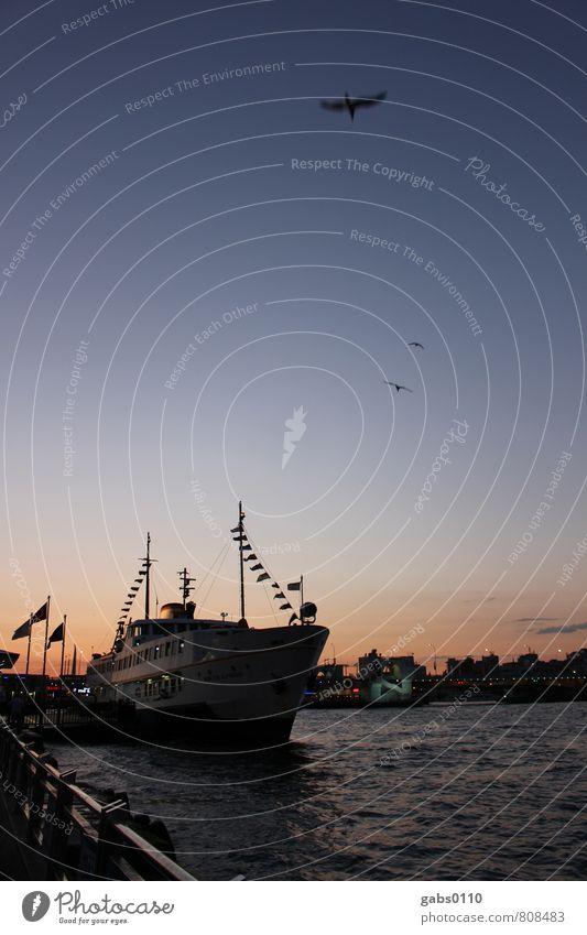 Ship ahoy! Transport Means of transport Navigation Boating trip Passenger ship Fishing boat Vacation & Travel Sky Bird Seagull Watercraft Ocean Istanbul Turkey