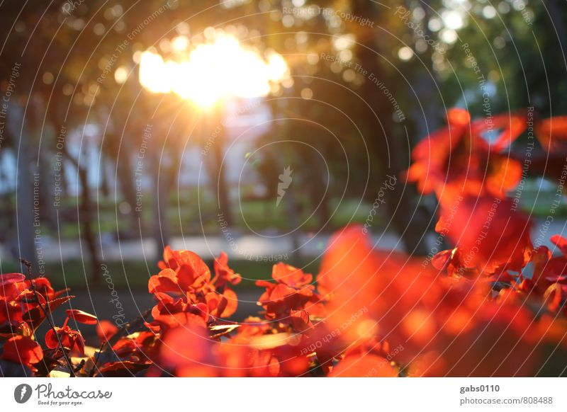 red flowers Environment Plant Blossom Park Yellow Green Red Tree Sun Romance Lanes & trails Promenade Warmth Positive Colour photo Exterior shot Deserted
