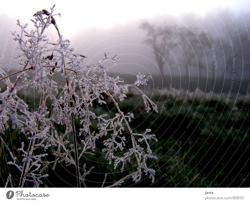 winter morning Cold Fog Forest Tree Sunrise Meadow Grass Ice crystal Winter Frost Morning jarts chill Snow