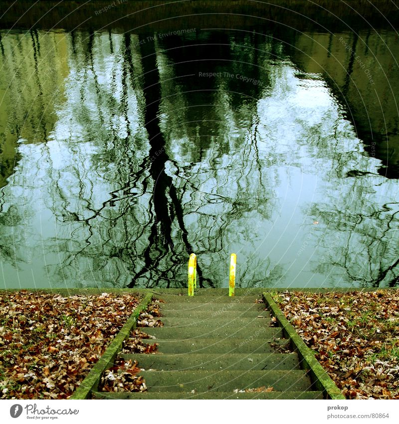 Water Leaf Autumn Cold Stairs Fresh Autumn leaves Ladder Downward Autumnal Mirror image Distorted Pool ladder Open-air swimming pool Neukölln Water reflection