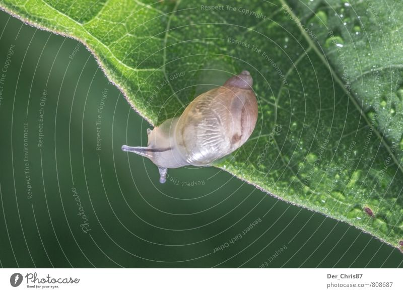 Nature Green Relaxation Leaf Animal Elegant Contentment Wild animal Drops of water Friendliness Curiosity Discover Running Brave Snail Endurance